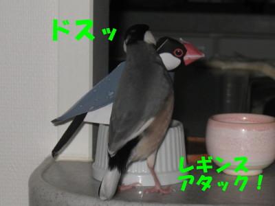 b0158061_2033999.jpg