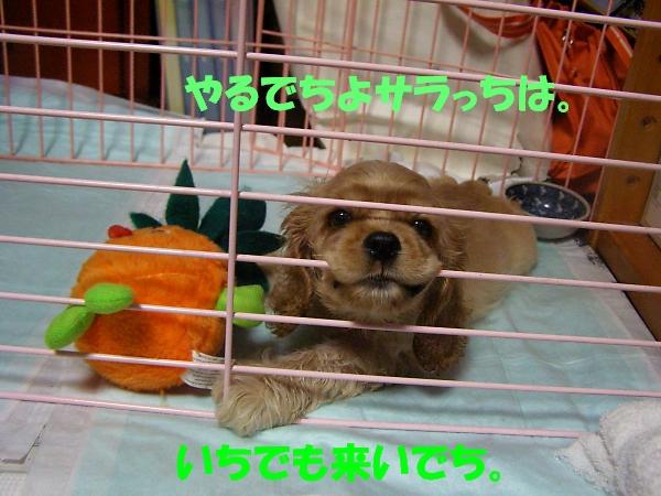 b0067012_14534881.jpg