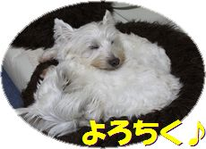 f0084422_20492.jpg
