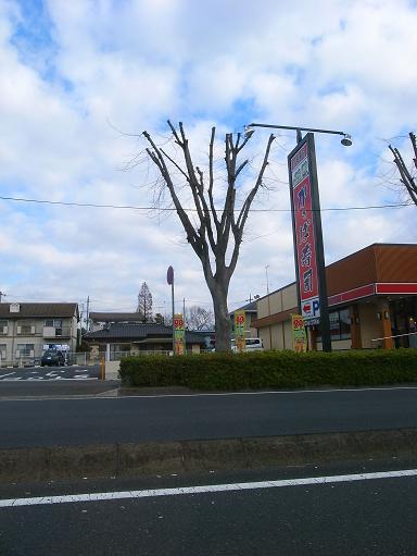 街路樹の剪定の仕方?_a0039934_18412565.jpg