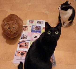 カレンダー猫 空しぇるのぇる編。_a0143140_2145944.jpg