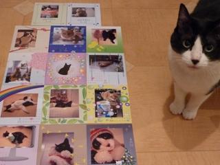 カレンダー猫 空しぇるのぇる編。_a0143140_214747.jpg