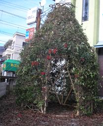 苦楽園口・夙川キャンドルナイト「光の散歩道」2009冬至・2_e0055098_0312456.jpg
