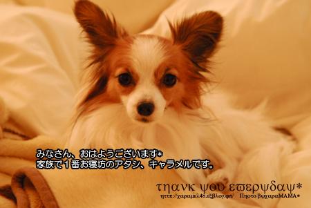 a0129509_10254497.jpg