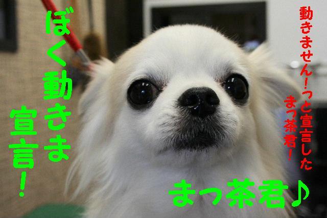 b0130018_1536415.jpg