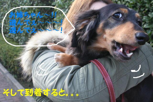 b0130018_15381198.jpg