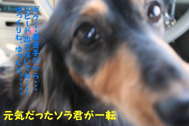 b0130018_1538535.jpg