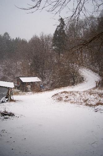 雪 降っています。_f0114346_19253817.jpg