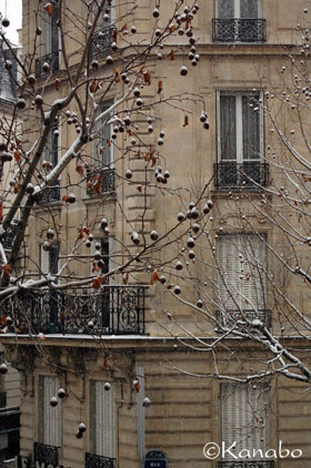 フランスの引っ越し屋・梱包編_f0099556_9154418.jpg