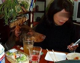 ワイワイお好み焼き_b0003270_1903082.jpg
