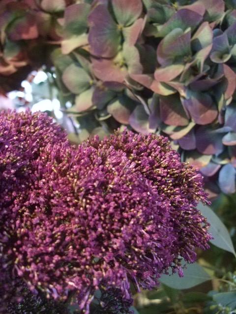 オークリーフ(花の色)_f0049672_15213430.jpg