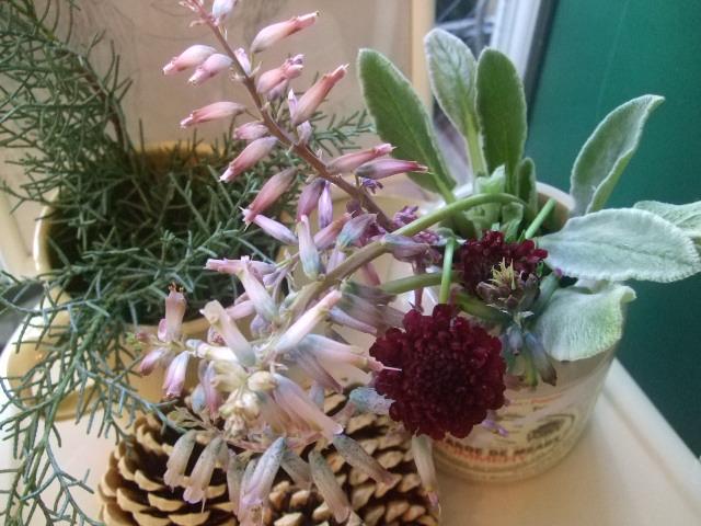 オークリーフ(花の色)_f0049672_1553950.jpg