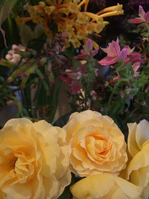 オークリーフ(花の色)_f0049672_1562889.jpg