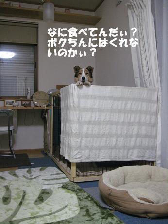 c0000189_1419318.jpg