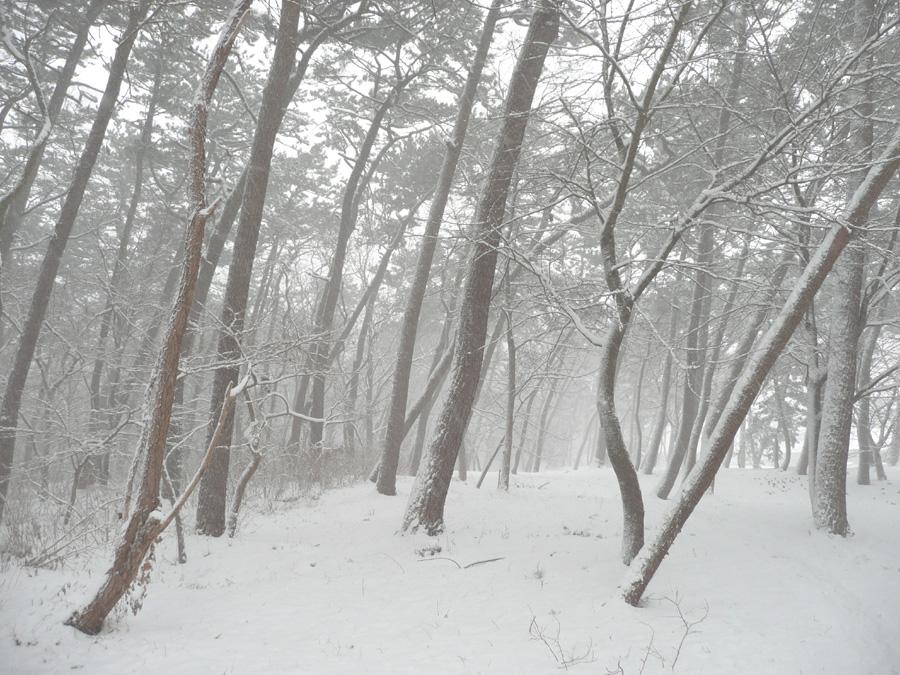 雪が降っています!_f0150893_204736.jpg