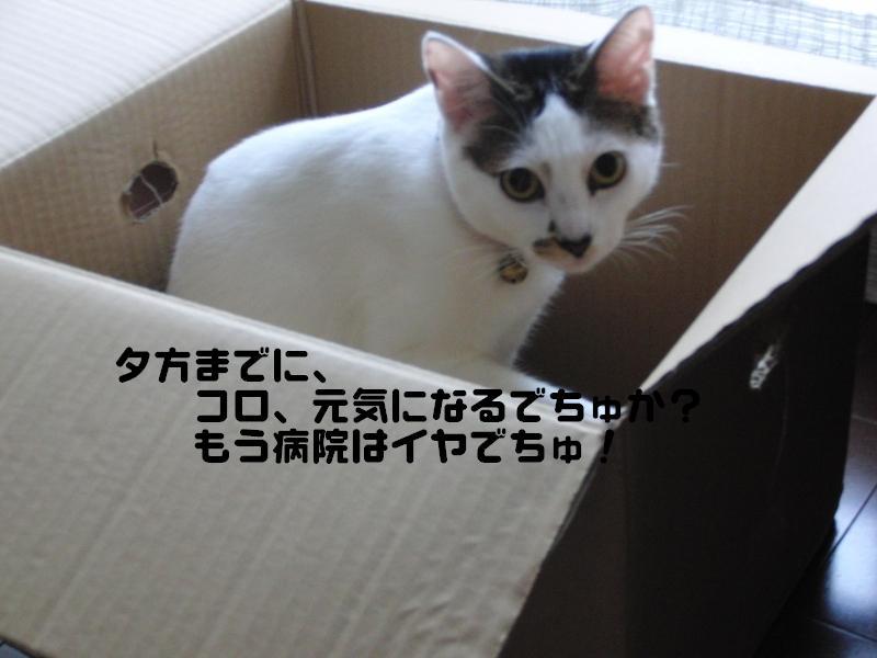 e0171996_10583019.jpg