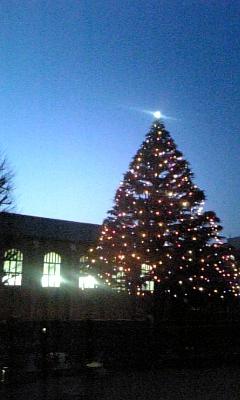 立教大学のツリー