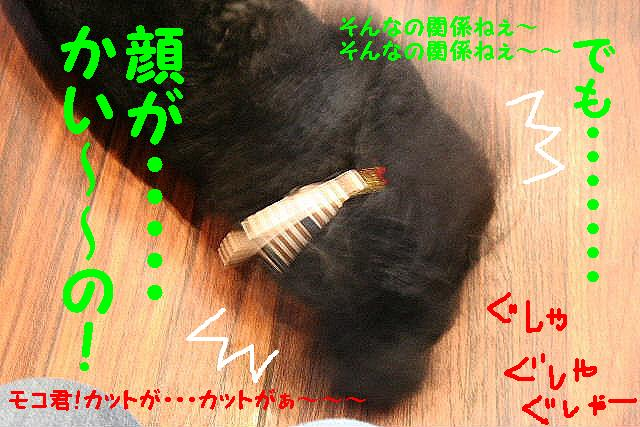 b0130018_1857129.jpg
