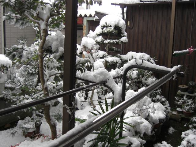 雪_c0088525_12142250.jpg