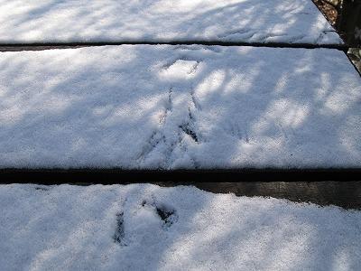 うっすら雪化粧_a0129867_1164292.jpg