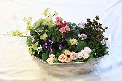 今年はちょっと早めの登場・・・・松永一さんのバラ咲きジュリアン_b0137969_13325162.jpg