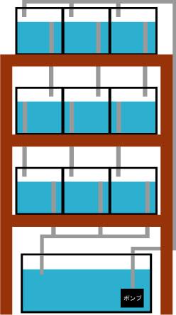 マンション水槽_e0173381_189870.jpg