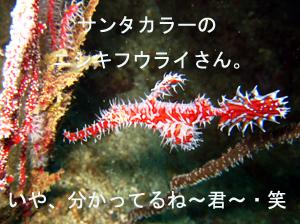 いでよピピ島!_f0144385_21545836.jpg