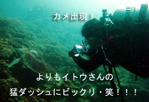 いでよピピ島!_f0144385_21574455.jpg
