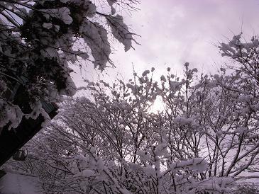 雪色欅ガルテン_d0087595_1293862.jpg