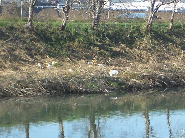 「春のお花見ウォーク」に向けた沼川、滝川の遊歩道整備_f0141310_23155422.jpg