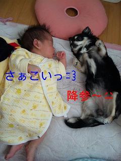 c0121141_16592045.jpg