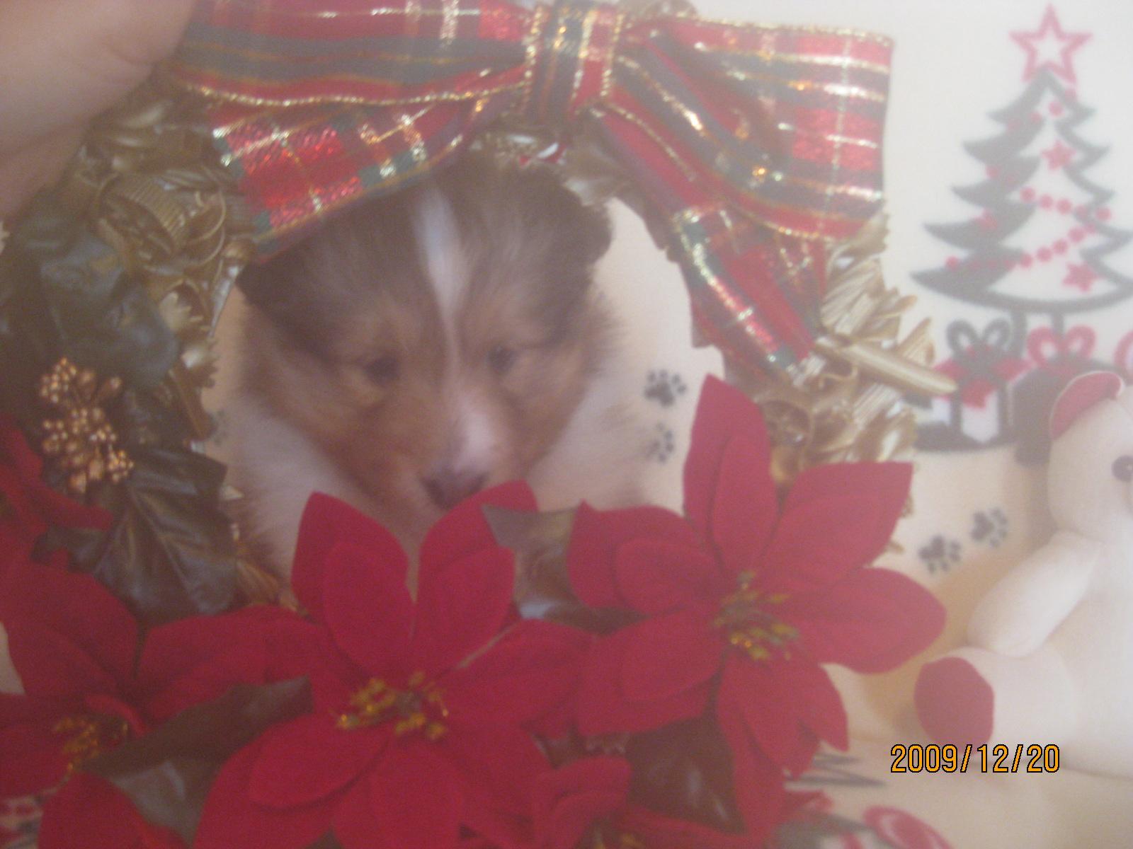 クィーンのクリスマス_a0139367_1053213.jpg
