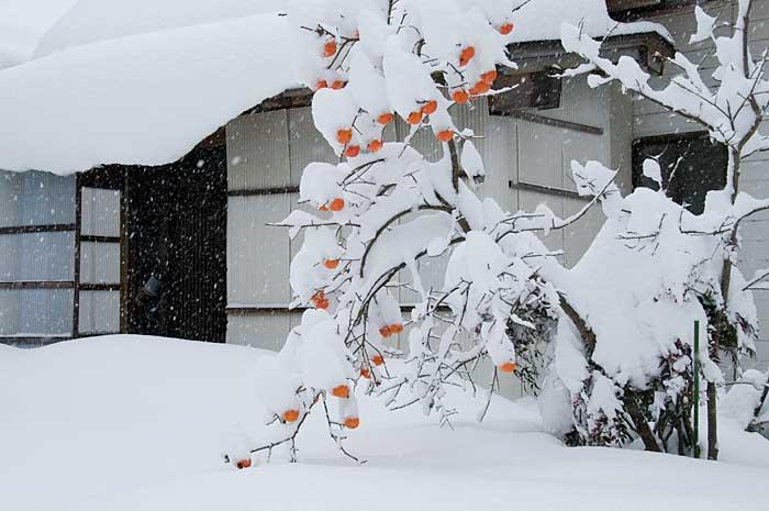 09.12.20「大雪」_c0085877_7291364.jpg