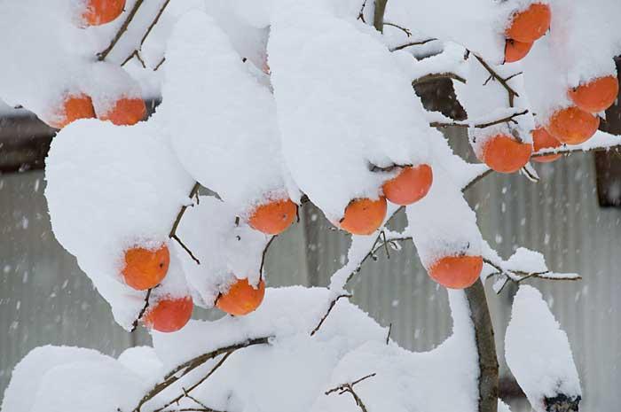 09.12.20「大雪」_c0085877_729361.jpg