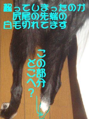 b0101991_22281673.jpg