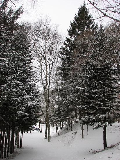 2009年12月21日(月):冬至は明日_e0062415_17583463.jpg