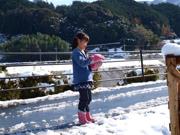 積雪の中シンビジウムの出荷です。_a0118539_3104779.jpg