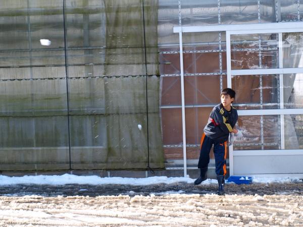 積雪の中シンビジウムの出荷です。_a0118539_3111226.jpg