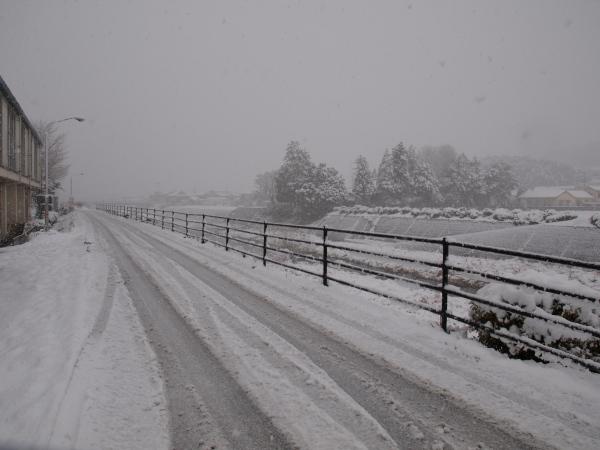 積雪の中シンビジウムの出荷です。_a0118539_392731.jpg