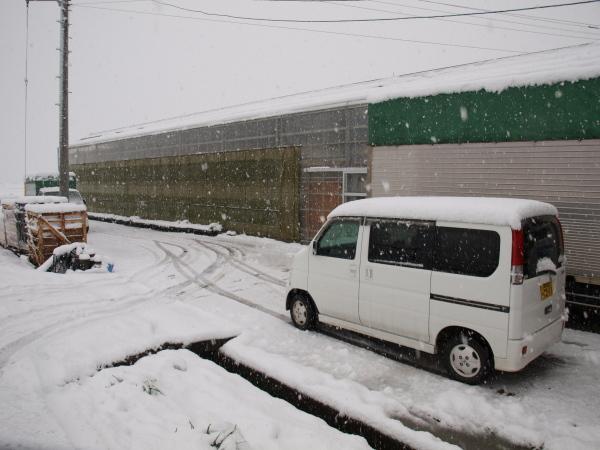 積雪の中シンビジウムの出荷です。_a0118539_394493.jpg