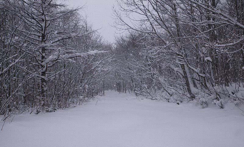 スノーシュー始め ~ 2009年12月20日_f0170180_6173111.jpg