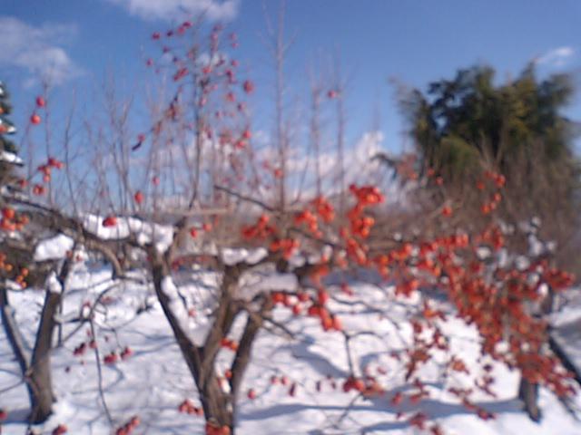 柿の実が。。_e0137684_1335376.jpg
