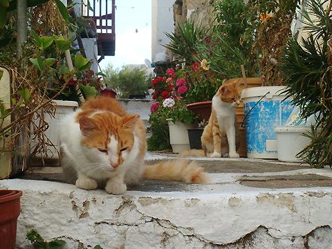 ホトケノザと、ユズリハ。ギリシャの猫_f0030085_22325167.jpg