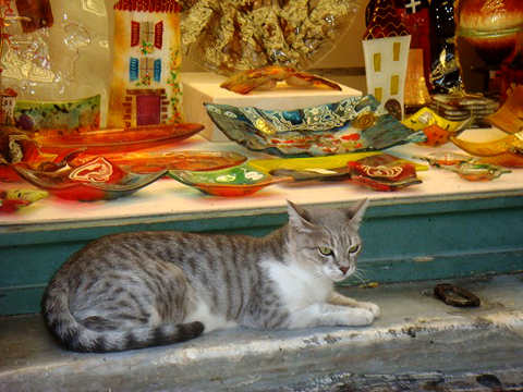 ホトケノザと、ユズリハ。ギリシャの猫_f0030085_22327100.jpg