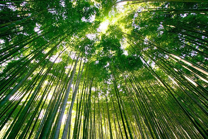 bamboo shower   - 竹って難しいなあ -_b0067789_23303413.jpg