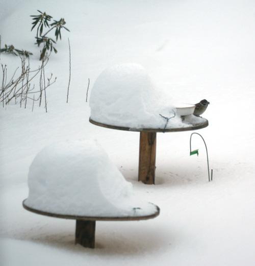 大雪の日の餌台♪_a0136293_1935570.jpg