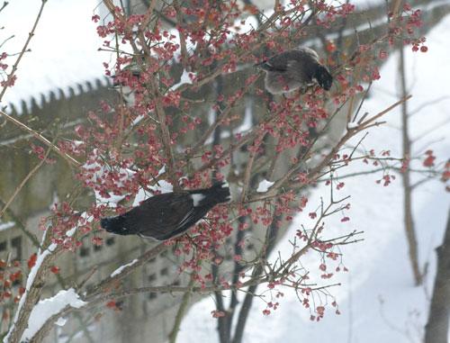 大雪の日の餌台♪_a0136293_1965745.jpg