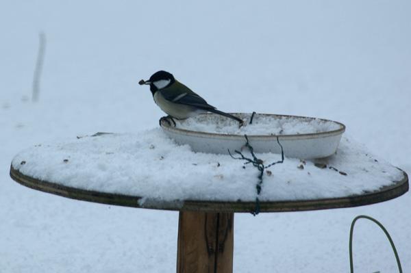 大雪の日の餌台♪_a0136293_1974425.jpg