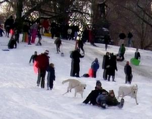 雪ソリ遊びから学ぶこと_b0007805_12451088.jpg