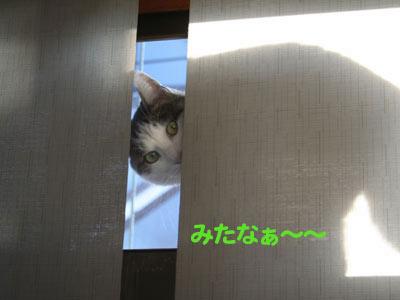 c0166018_127372.jpg